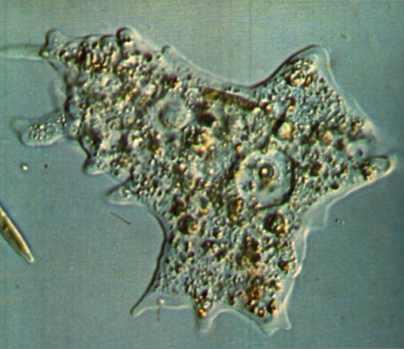celula procariota y eucariota. celula procariota y eucariota.