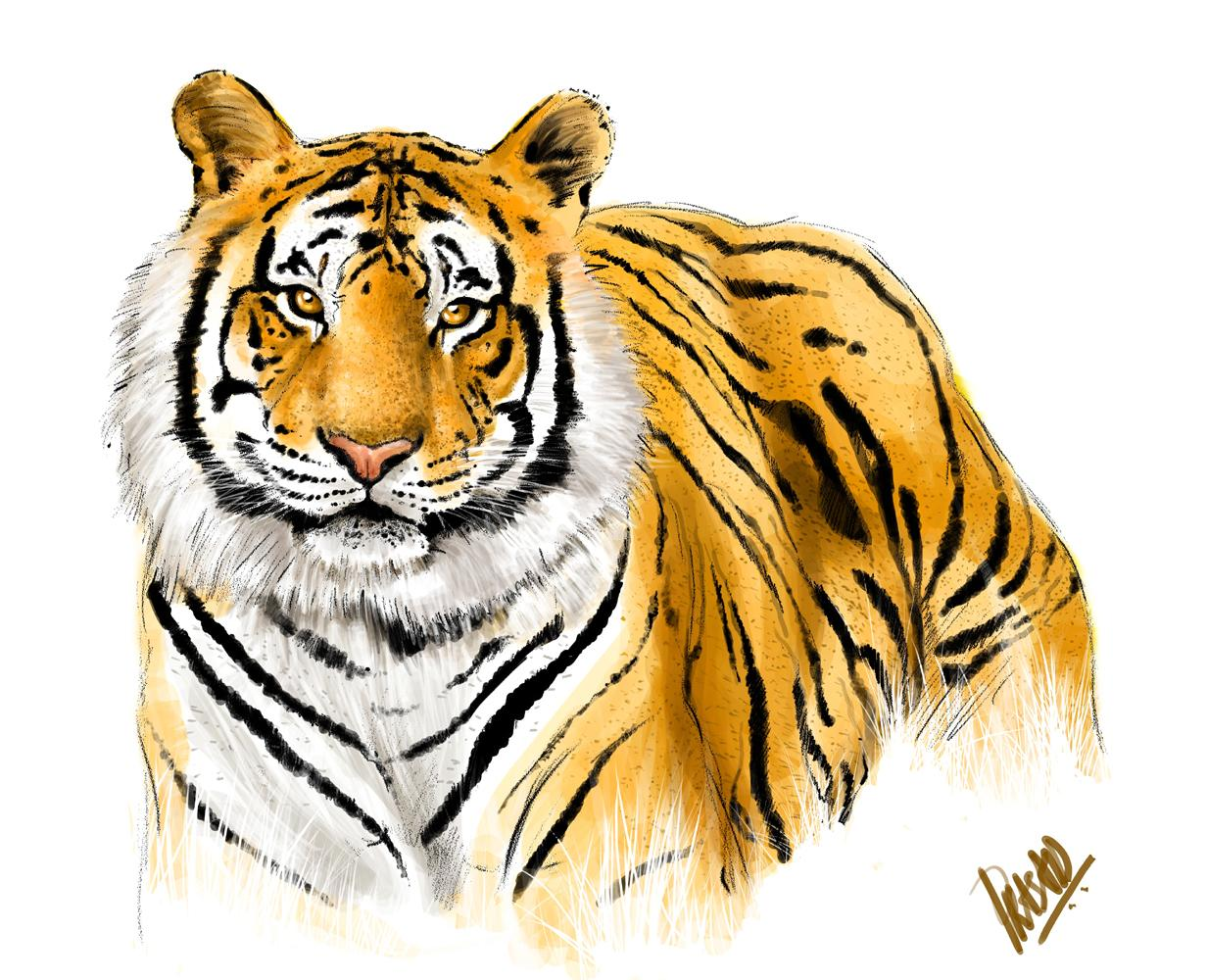 The Royal Bengal Tiger The Endangered Species MyClipta