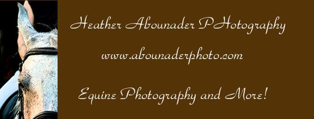 Heather Abounader Photography Blog
