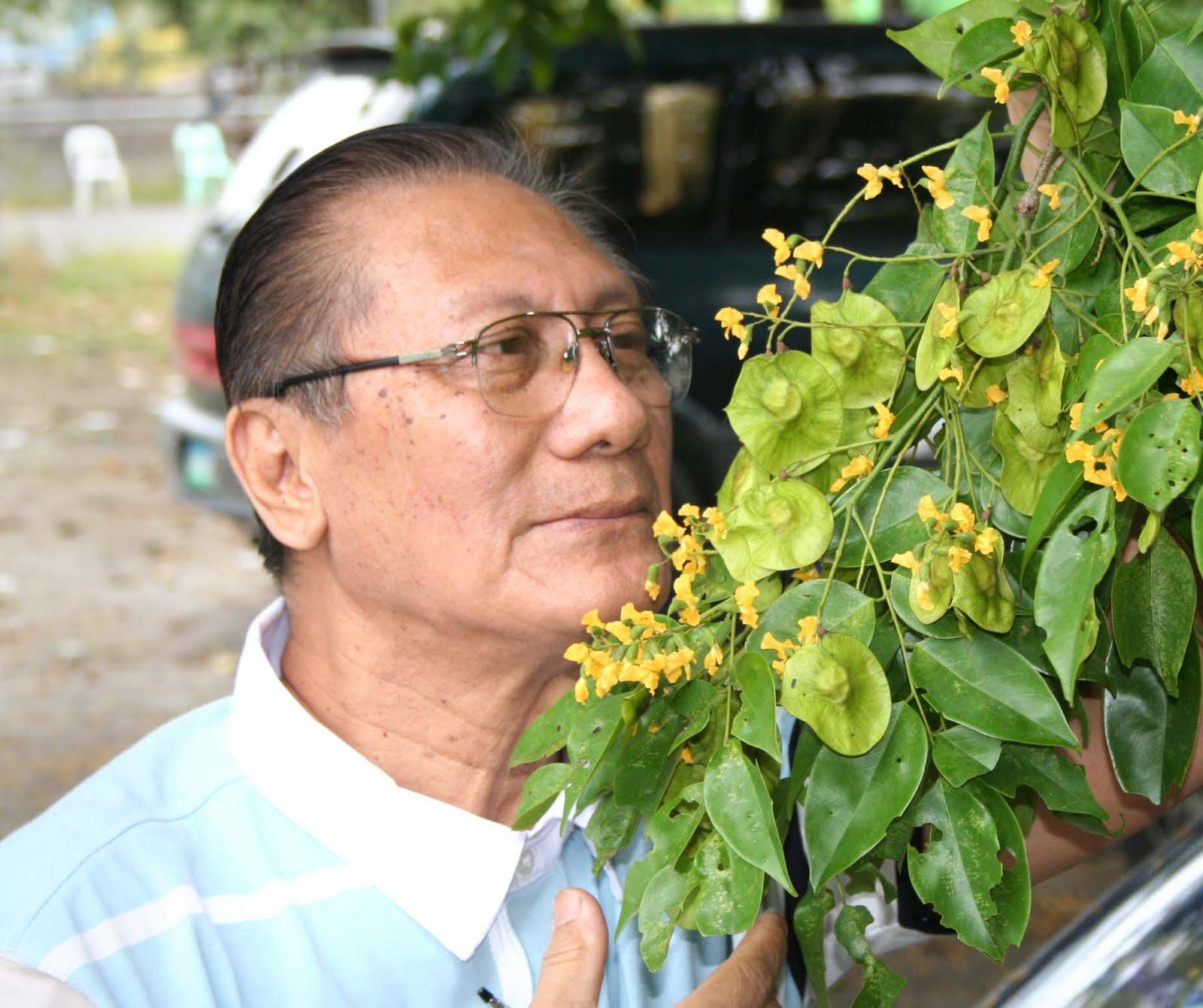 use eucalyptus for sore throat