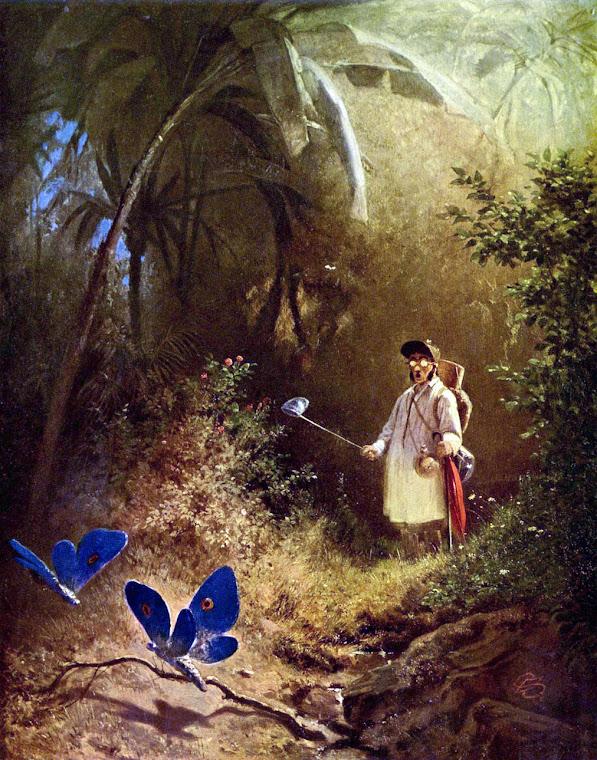 """The Butterfly, """"Bird"""" of Summer"""
