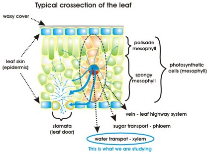 Lyl4science External And Internal Parts Of Plant Organs