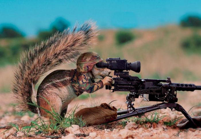 squirrel machine gun
