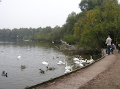 Shakerley Mere,Holmes Chapel