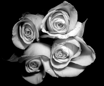 [multiflorafernandopolis,+rosas+4.jpg]