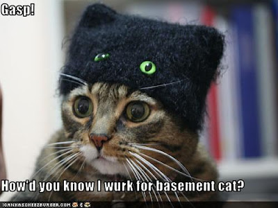 ceiling cat or basement cat which one wins