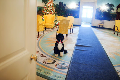 Political Style The White House Festive Photostream