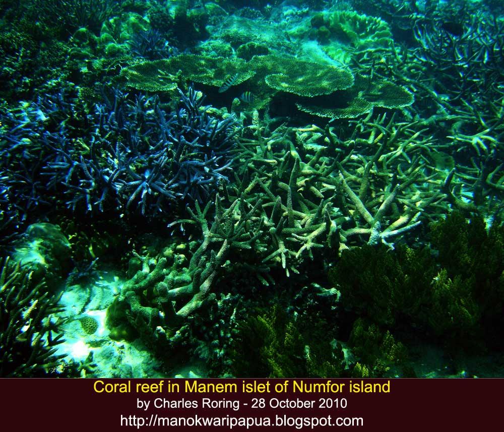 Nature Tourism: Coral Reef In Manem Islet
