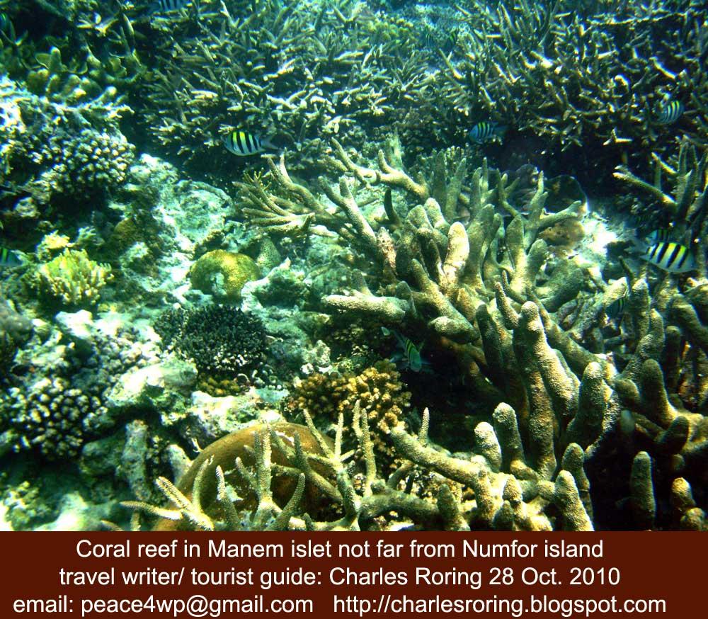 Raja Ampat Reef: December 2010