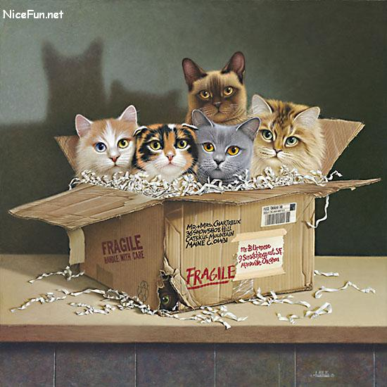 Five cats aren t they adorable