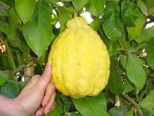 Un giga-limone