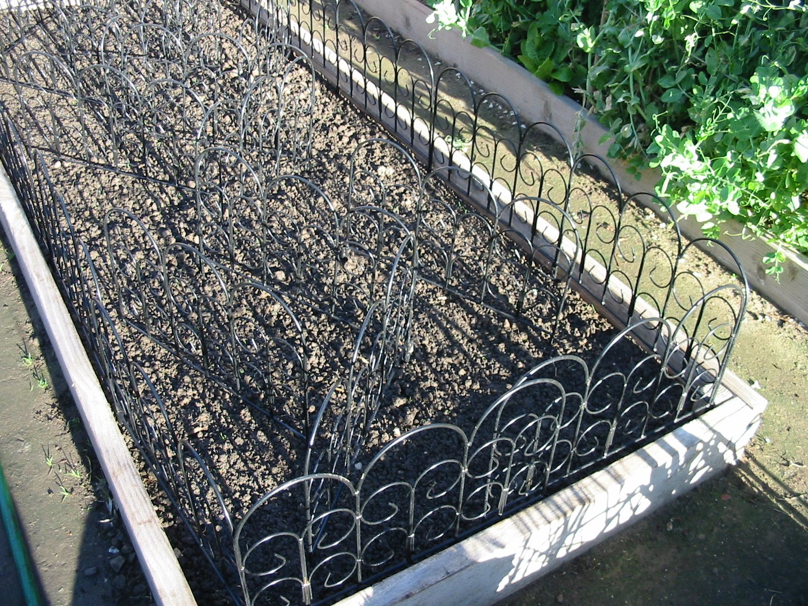 Garden Updates January 2011. Garden Fence Ideas To Keep Dogs Out. ...