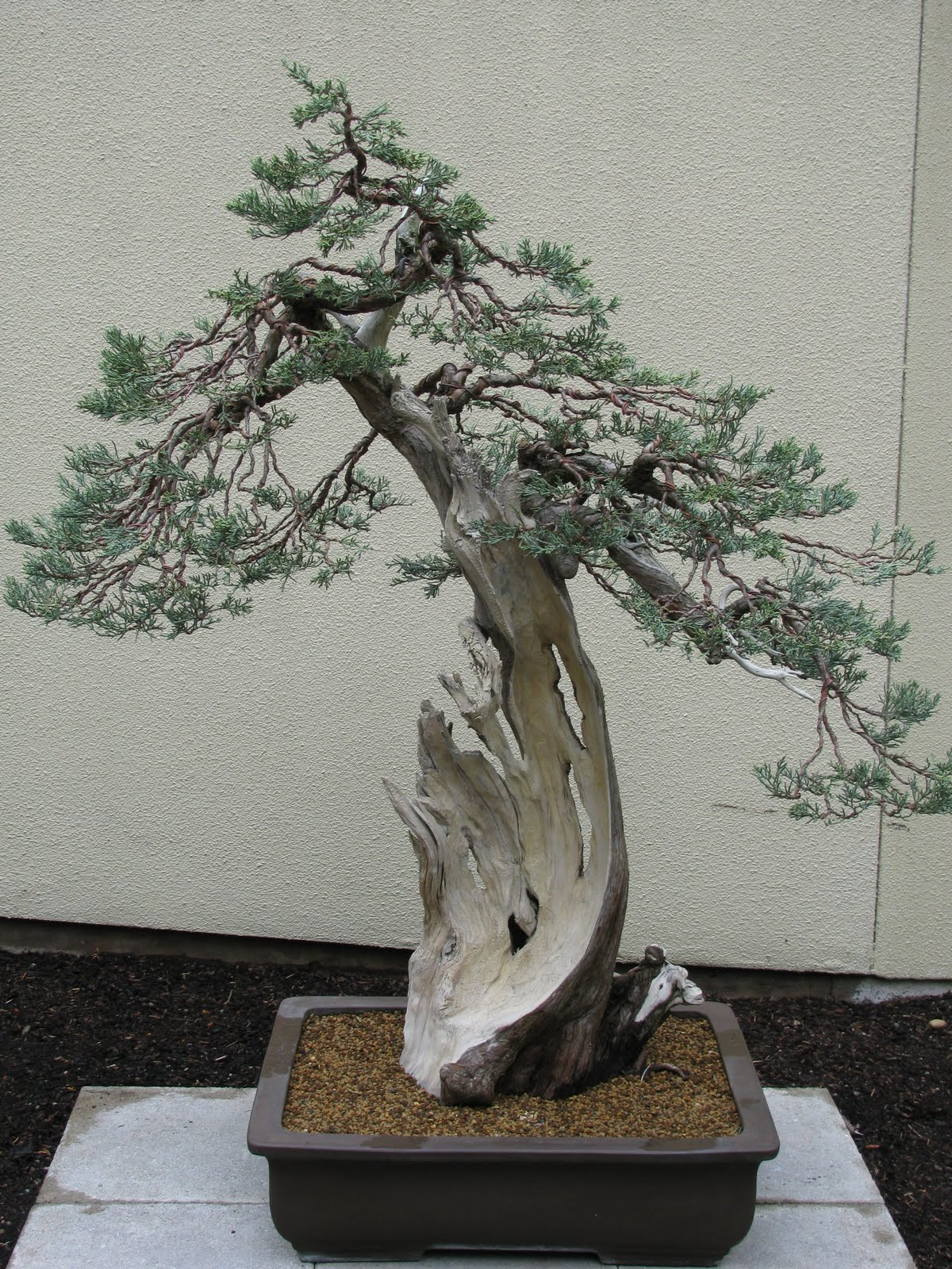 Linda Letters The Pacific Rim Bonsai Collection