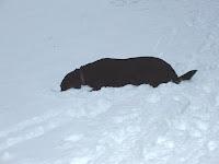 The Dog Adirondack Lifestyle – Puz you lucky dog.
