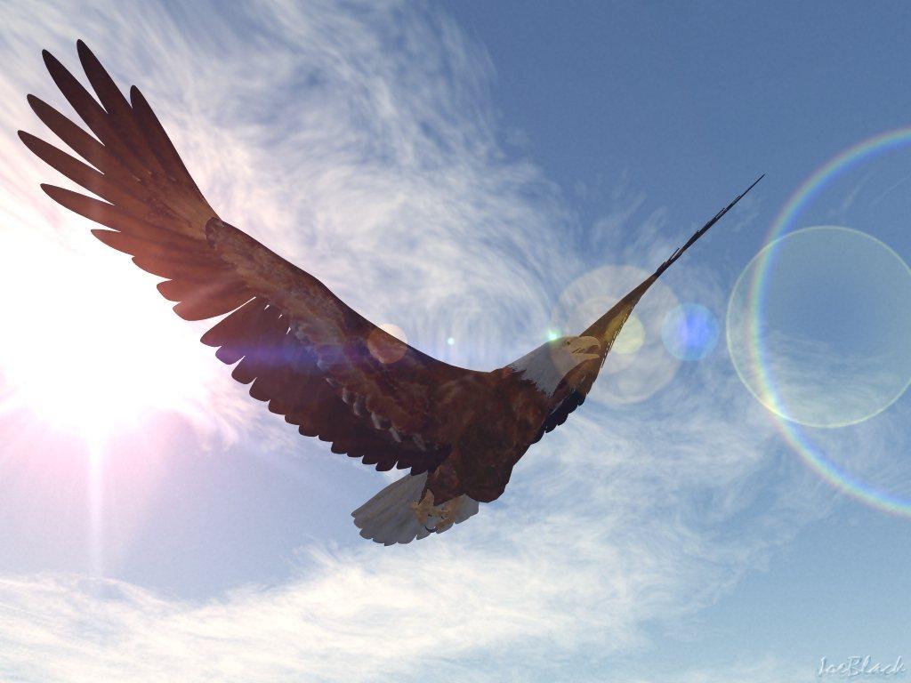 http://1.bp.blogspot.com/_TCvJTGlm6Po/TCFeO_Te5iI/AAAAAAAAAUg/eeXSpLayzS8/s1600/Spirit+eagle.jpg