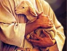 Amo minhas ovelhas