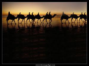 http://1.bp.blogspot.com/_TF96qIjqesQ/Sb9_Ycfi-EI/AAAAAAAADUA/x_MZmuSZz_A/s400/wallpaper-camel-desert.jpg