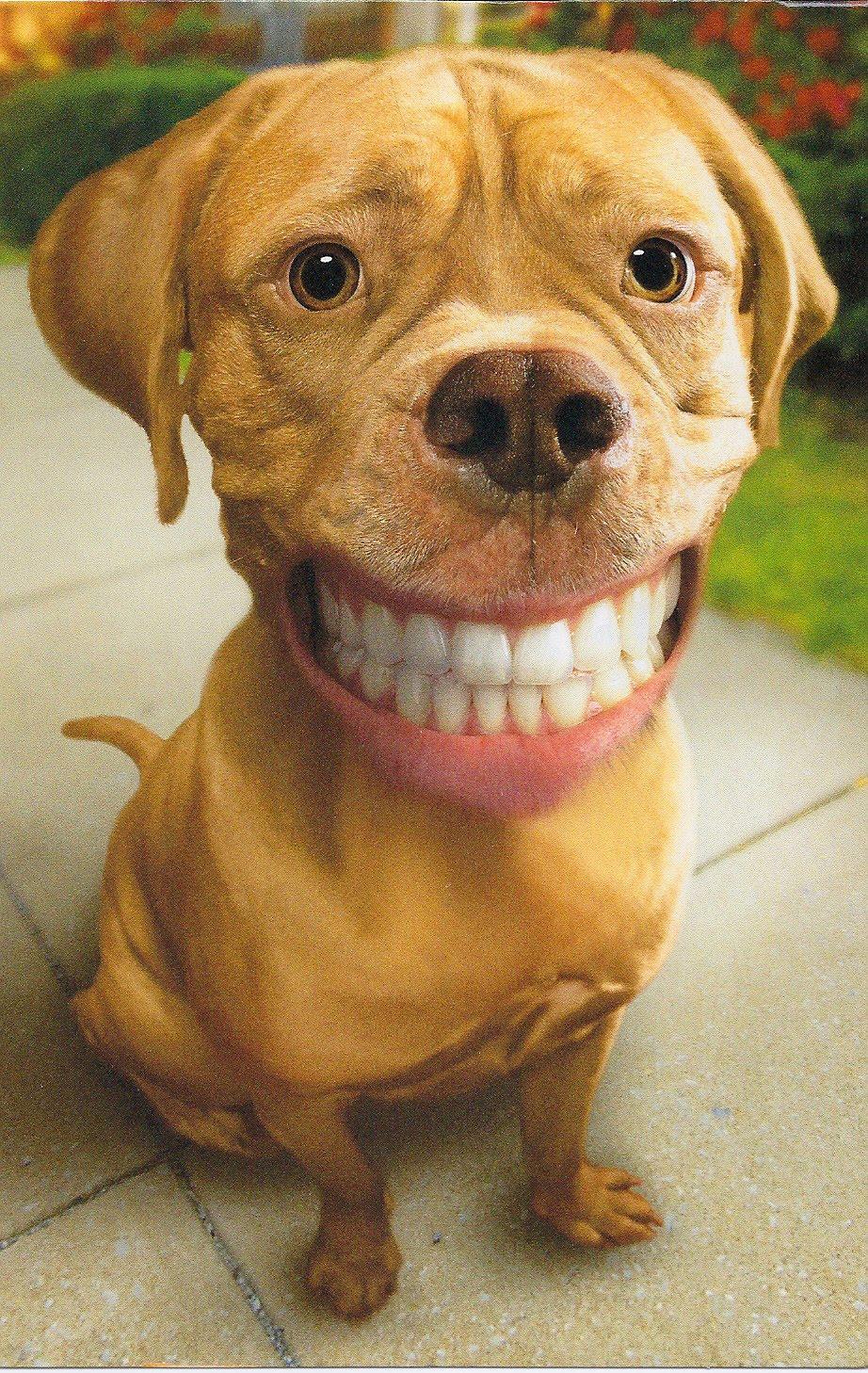 Smiling Animal Teeth