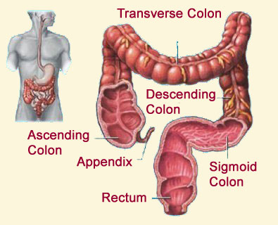 Haustrae http://www.gethealthwealthwisdom.com/2009/11/colon-cancer-hits-home.html