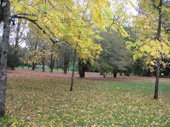 Jardín Botánico en Otoño