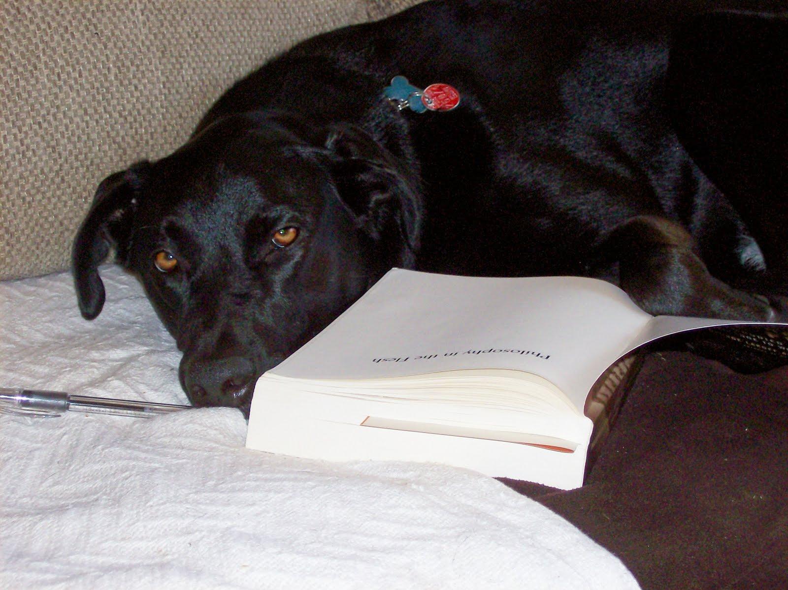 [Wrigley+reading+Lakoff+&+Johnson.jpg]