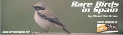 Rare Birds in Spain
