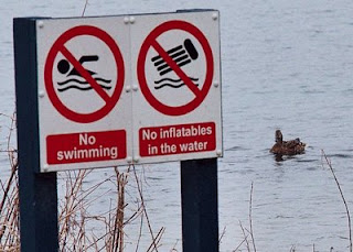 Rebellious duck