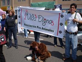 PROTESTA EN SAN BORJA POR GRINGO