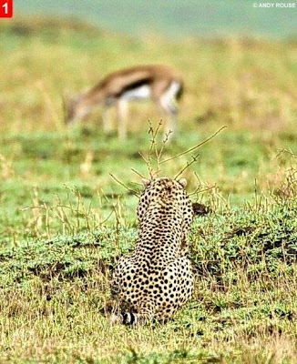 How to Hunt, A Demo by mother Cheetah Seen On www.coolpicturegallery.net