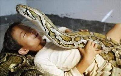 Unusual Pet-Snake