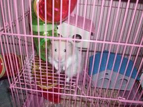 my late junsu