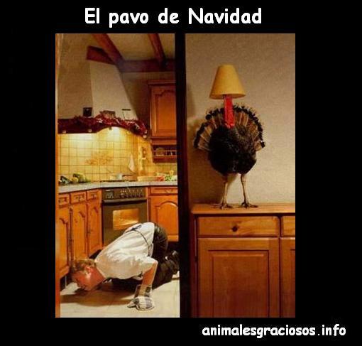 imagenes de feliz navidad chistosas - Fotos graciosas y chistosas Facebook