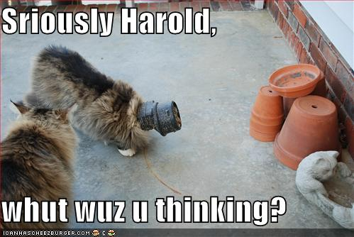[funny-pictures-cat-has-something-stuck-on-head.jpg]