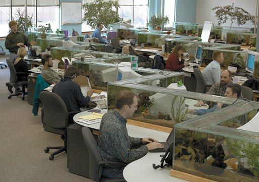 [aquarium_cubicles.jpg]