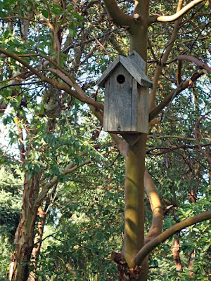 bird house, madrona trees