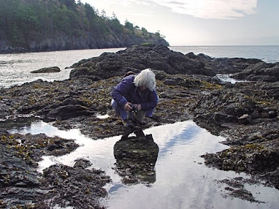 Elaine Hartley photographing tide pools