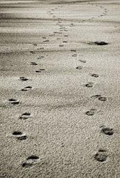 Seguite i miei passi...