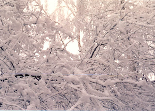 Зима на ветках