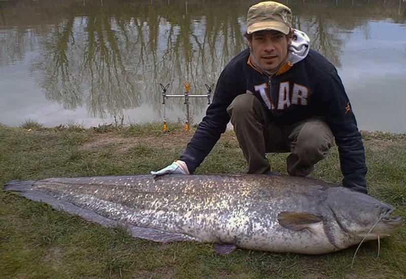 Match fishing italy una dura battaglia chiamata siluro for Grosso pesce di lago