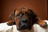 farmacii veterinare iasi