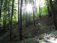 Peisaje cu paduri verzi