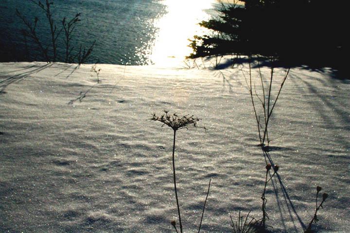 [snowlace+blog.jpg]