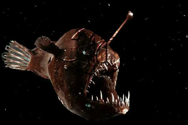 Marine habitats explained for children seas and oceans for What do angler fish eat
