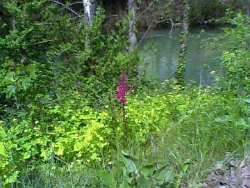 Primavera en la orilla del río