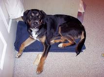 My Quilt Dog