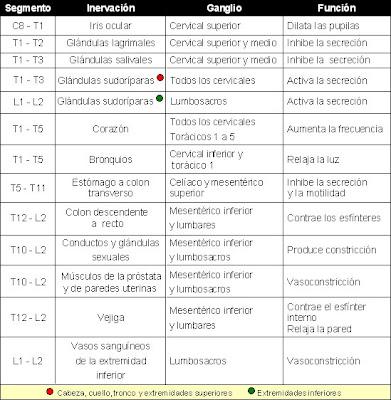inervación y funciones de los segmentos torácidos y lumbares