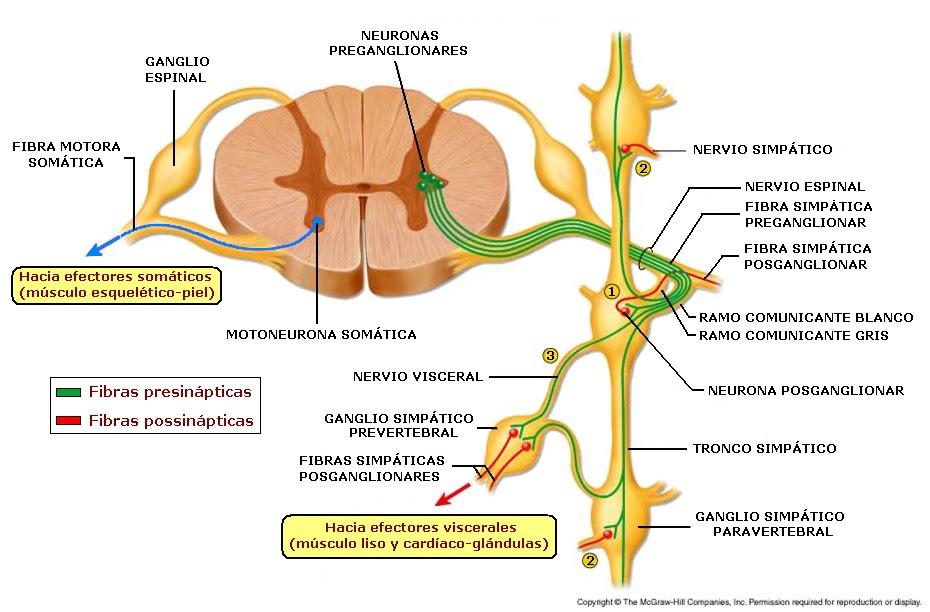 Sistemas del Cuerpo Humano: marzo 2013