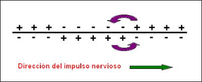 Despolarización de la membrana
