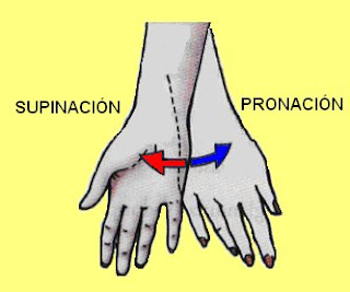 movimientos de supinación y pronación