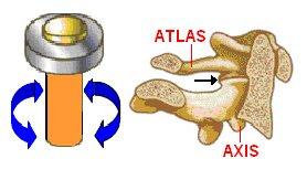 ejemplo de diartrosis trocoidea